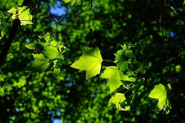 Paperless Office - Kantor Tanpa Tumpukan Kertas Pohon Paru Paru Dunia a1