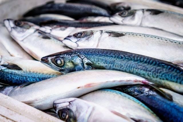 10 Manfaat Laut Bagi Kehidupan Manusia - sumber pangan bagi manusia