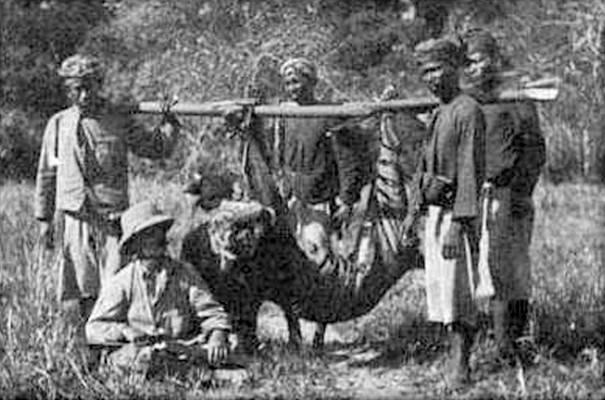Foto Perburuan Harimau Bali Tahun 1911