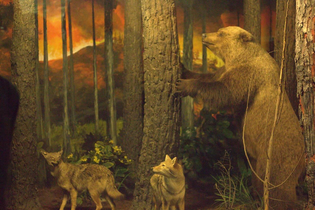 Diorama Kebakaran Hutan Museum Satwa Jatim Park