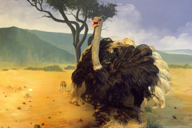 Diorama Padang Rumput Museum Satwa Jatim Park - Burung Unta