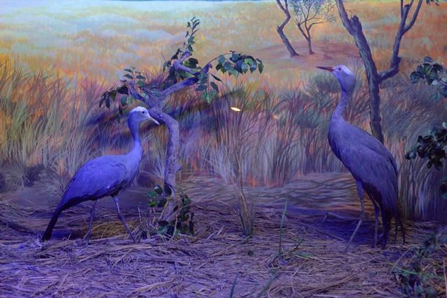 Diorama Padang Rumput Museum Satwa Jatim Park - Burung