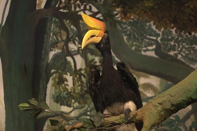Diorama satwa burung Museum Satwa Jatim Park Malang