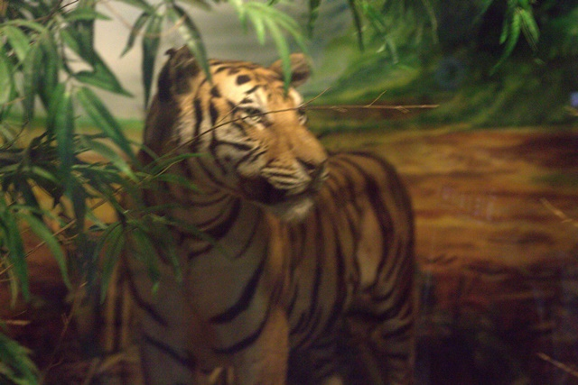 Diorama satwa hutan Museum Satwa Jatim Park Malang - Harimau
