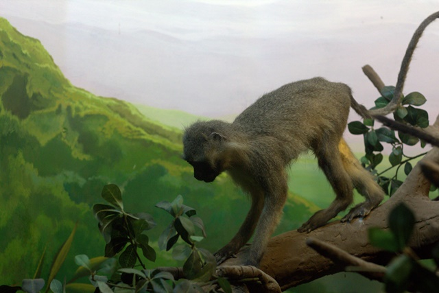 Diorama satwa hutan Museum Satwa Jatim Park Malang Monyet