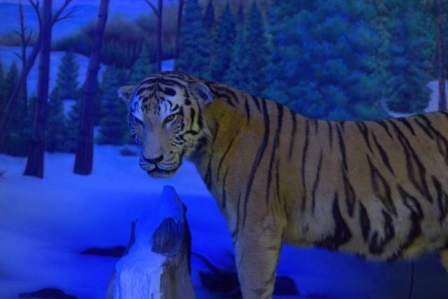 Diorama satwa kawasan bersalju Museum Satwa Jatim Park Malang