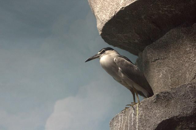 Diorama satwa laut dan kehidupan bawah air Museum Satwa Jatim Park Malang Burung Pemakan Ikan