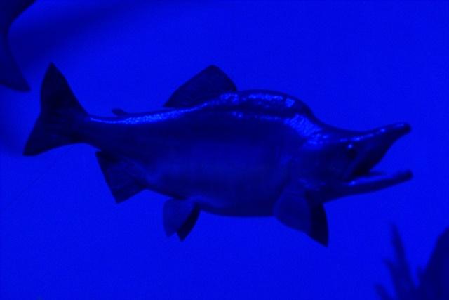 Diorama satwa laut dan kehidupan bawah air Museum Satwa Jatim Park Malang010
