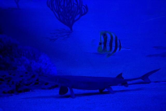 Diorama satwa laut dan kehidupan bawah air Museum Satwa Jatim Park Malang011