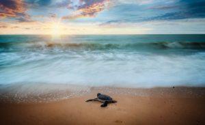 Hari Lingkungan Hidup Sedunia – 5 Juni