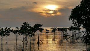 8 Manfaat Hutan Bakau (Mangrove) Bagi Kehidupan