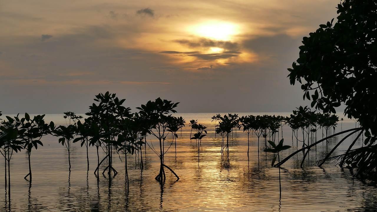 Manfaat Hutan Bakau (Mangrove) Bagi kehidupan A