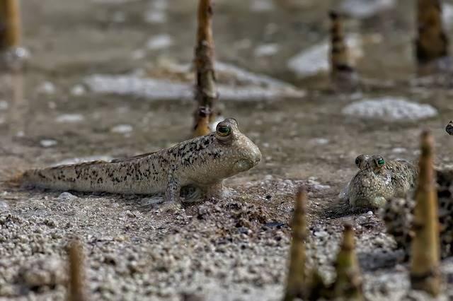 Manfaat hutan bakau bagi kehidupan manusia
