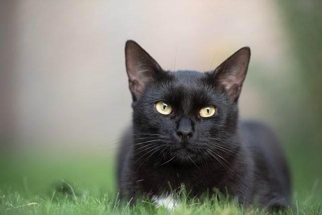 Mau Tahu Cara Merawat Kucing, Ini Daftar Blog-Website Pecinta Kucing